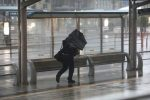 Typhoon Trami pounds Japan, dozens injured