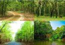 গাজীপুরের শ্রীপুর ভাওয়াল বনভূমি একটি শান্তির রাজ্য